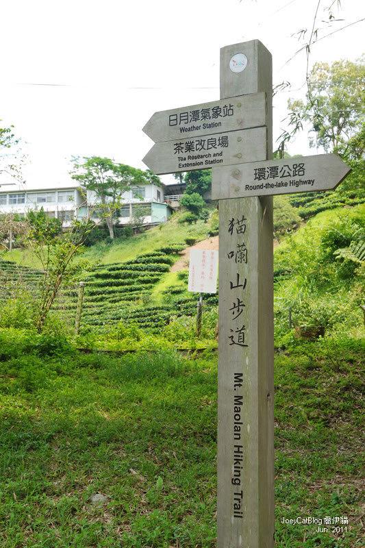 【南投】阿薩姆紅茶的故鄉。貓蘭山步道之旅DSC_1726