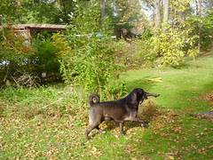 cody raking leaves 010