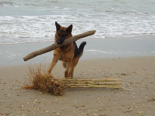 Un grande e forte cane al mare by Ylbert Durishti