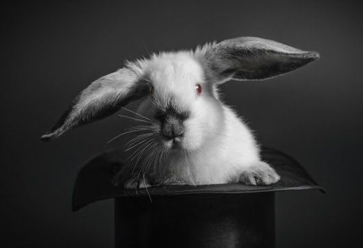 Great Leaders Serve | By Mark Miller | How to Pull a Rabbit Out of Your Hat