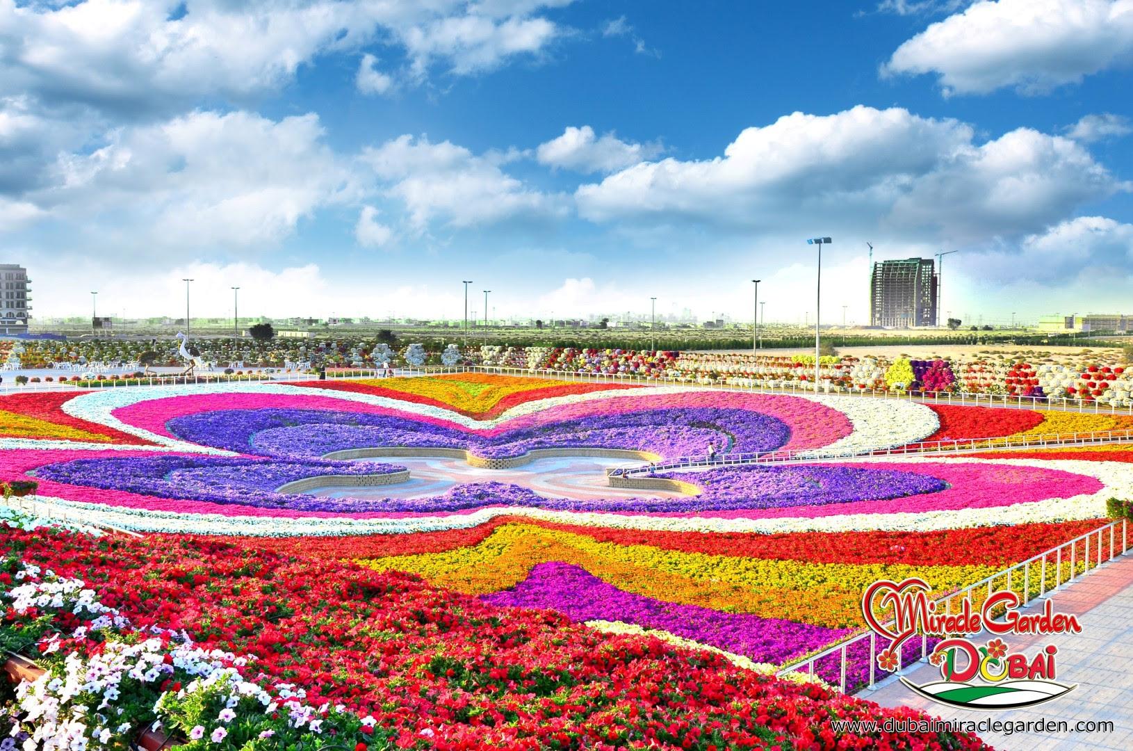 Dubai Miracle Garden 04