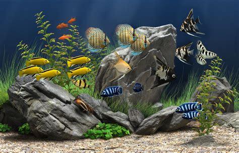 aquaristik gase partner sottrum onlineshop