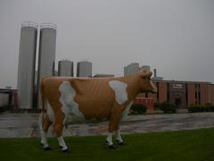 Golden Guernsey Dairy