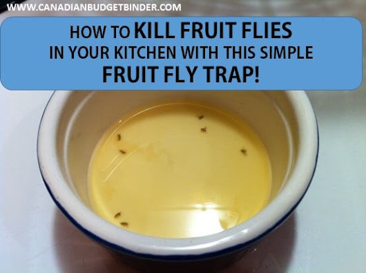 How to kill fruit flies fast with this simple fruit fly trap : The Grocery Game Challenge #4 Sept 28-Oct 4, 2015 - Canadian Budget Binder