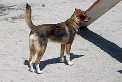Harper_dogpark_42912b