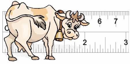 Cattle Body Condition Scoring: how (and why) to monitor cattle body fat