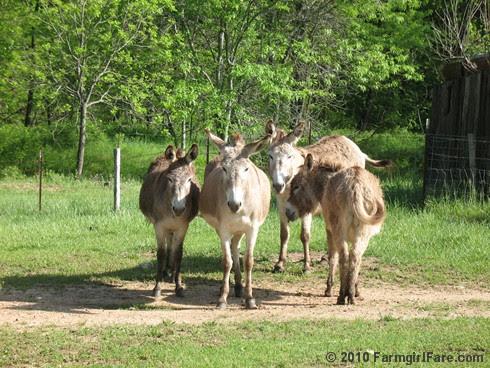 Donkey Rolls 7