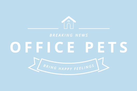 Pawsitive Vibes from Office Pets | Hurrdat
