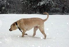 Zeus_snow_30909c