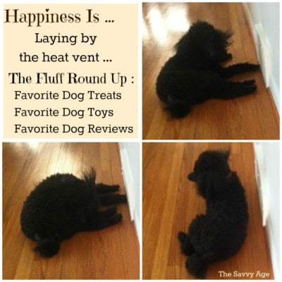Happiness Is ... Favorite Dog Round Up! - The Savvy Age