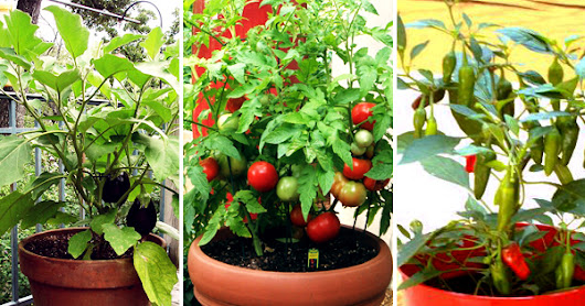 Say #NoChemicalVegetables. Start #OrganicGardening at home. Get #FreeVegetableSeeds @nurserylive.