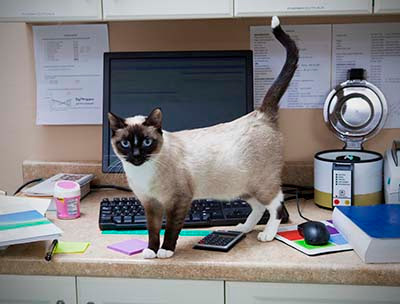 7 Jobs That Were Made For Cats | Veterinarians in Atlanta, Georgia | East Atlanta Animal Clinic