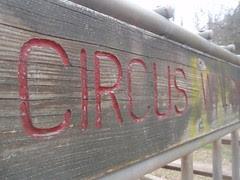 circus wagon (2)