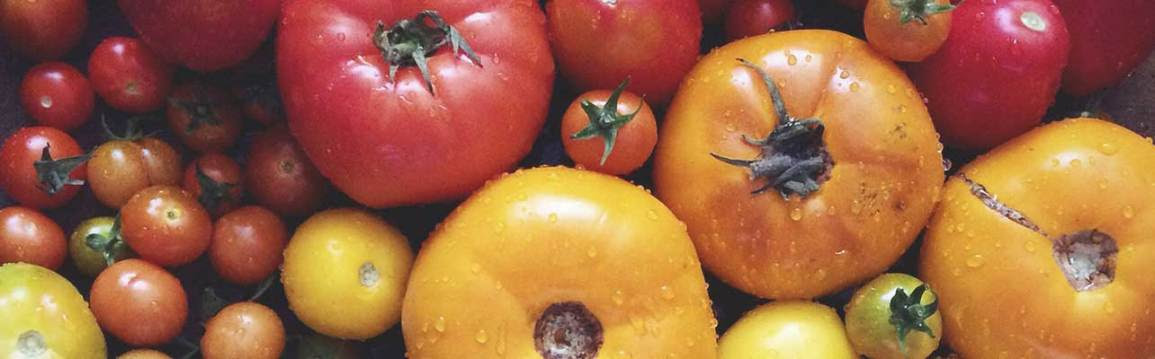 Nutritious Nightshade plants: tomatoes, potatoes and more