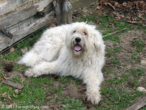 Dog Cute 1