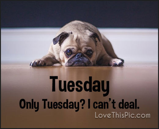 Only Tuesday I Cant Deal Pictures Photos And Images For Facebook