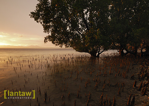 Maasim Mangroves Sunrise