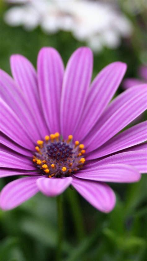 purple flower iphone wallpaper gallery