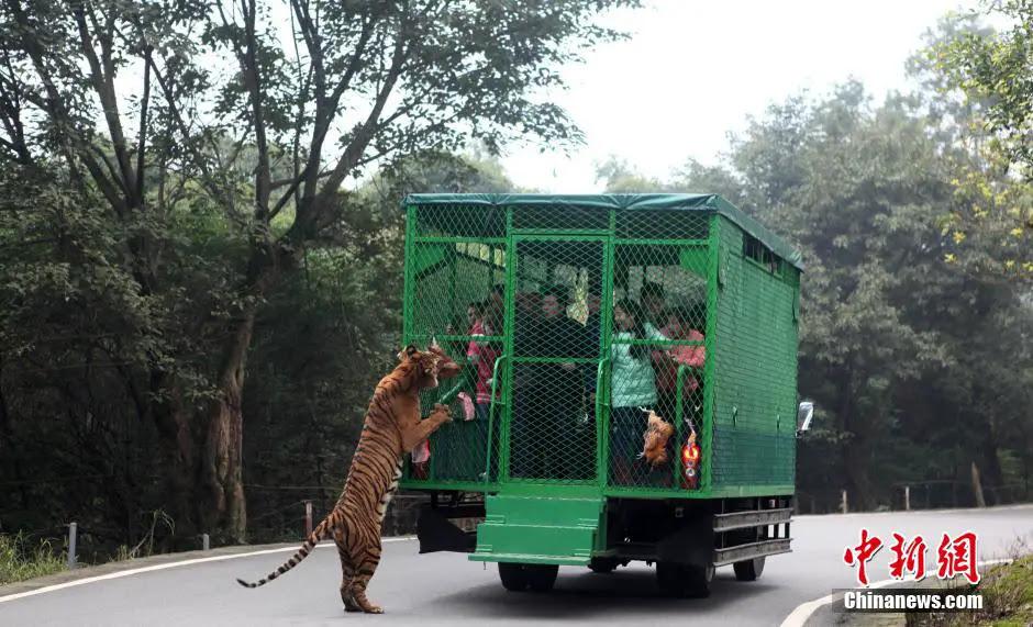 china-zoologico-animales-libres-4