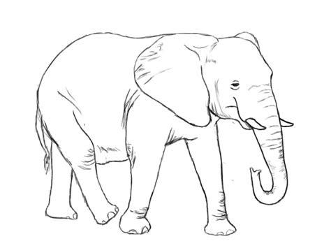 draw  elephant draw central