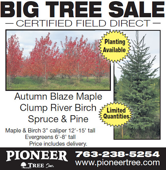 Big Tree Sale