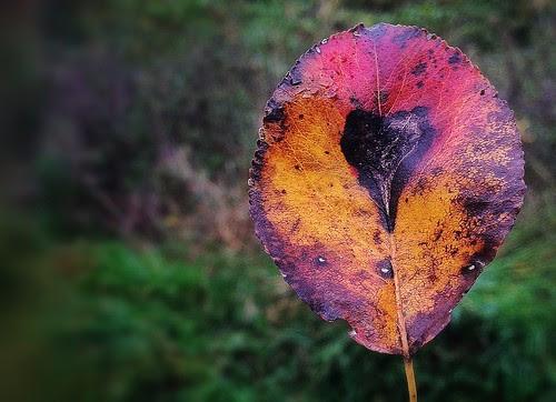 Autum´s Heart