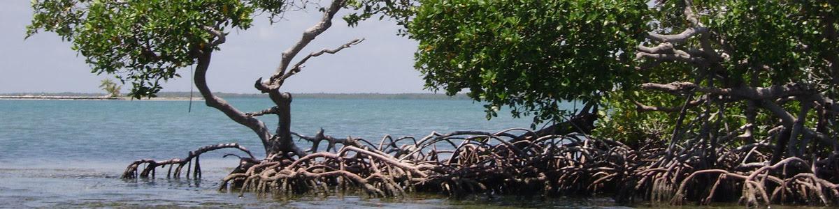 mangroves1_0