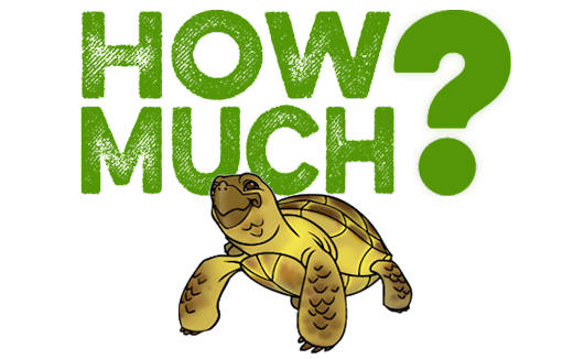 How Much Does a Russian Tortoise Cost? | Beginner Guide