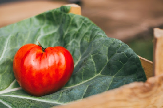 FOR THE LOVE OF FOOD: Ticks spread meat allergies, gut bacteria increase lifespan, and your Italian tomatoes are probably fake