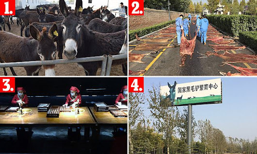 How 4million donkeys are slaughtered every year to make Chinese serum