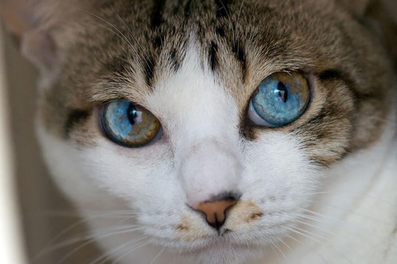 20 animais extraordinariamente belos com olhos ímpares 10