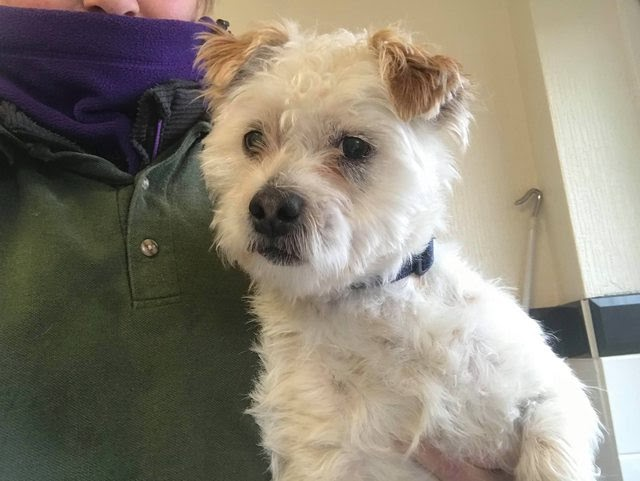 Ted – 10 month old male Terrier Cross