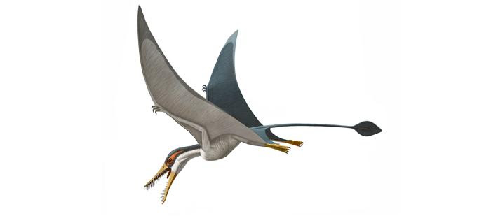 Rhamphorhynchus 700.309