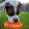 El consumo de Agua en los Perros