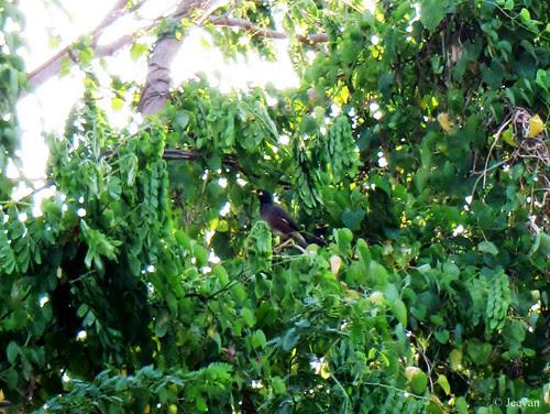 A bird amid bush