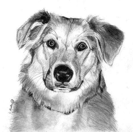 learn   draw  dog graphite art lesson