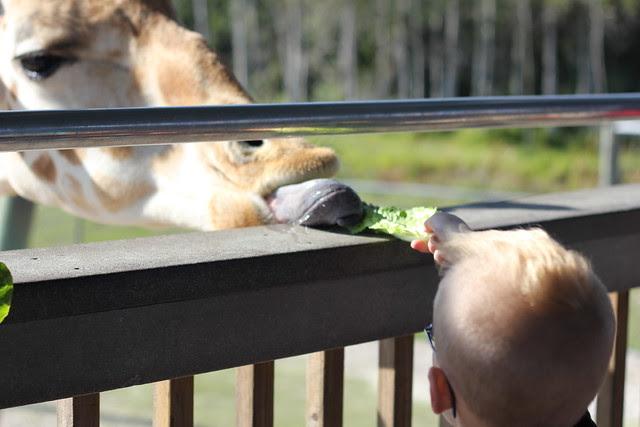 Lion Country Safari for Jonathan's Birthday