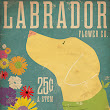 Labrador Flower Company Dog Poster - Dogs Posters Art Prints
