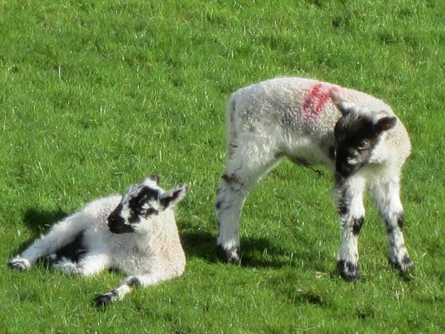 Lake District April 2012 (122)