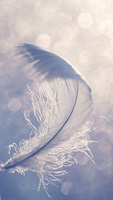 The symbolic white feather.