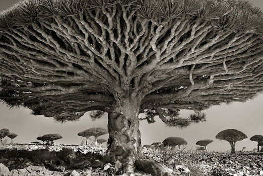 Photographer Spent 14 Years Capturing The World's Most Aged Trees > FREEYORK