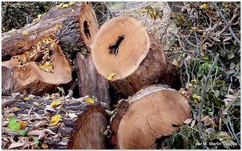troncos cortados