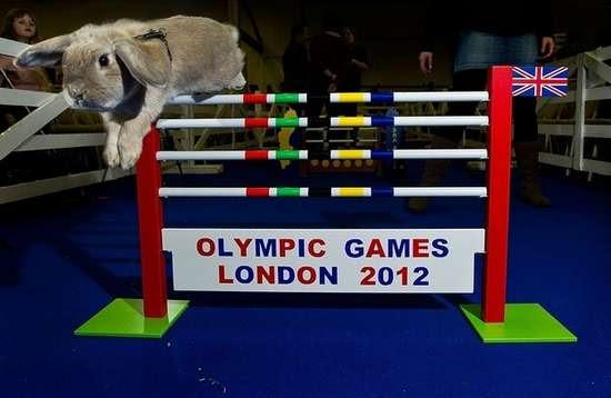 Ολυμπιακοί αγώνες για κουνέλια (10)