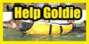 Help Goldie