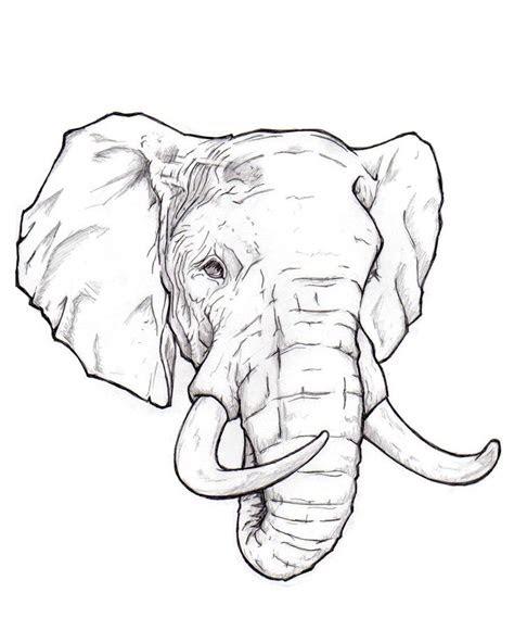 elephant head drawing ideas  pinterest owl
