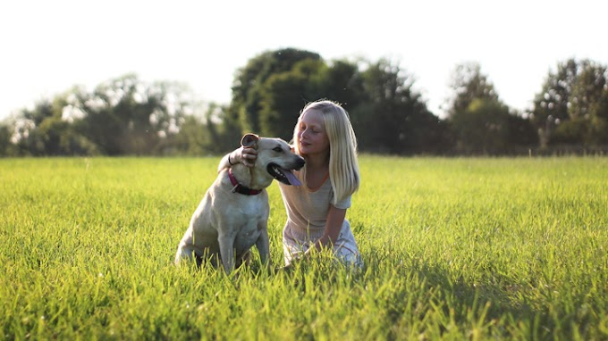 Perros que son los mejores amigos para jugar