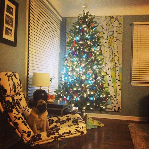 Koko at Christmas 2013