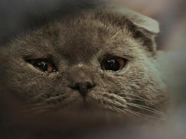 gato-triste-3