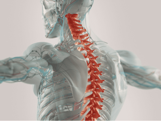 Spinal Cord Injuries from a Car Crash: Colorado Springs Auto Accident Lawyer Explains Rights of Victims