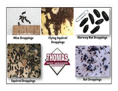 Thomas Pest Services   Albany, NY 12205   Angies List